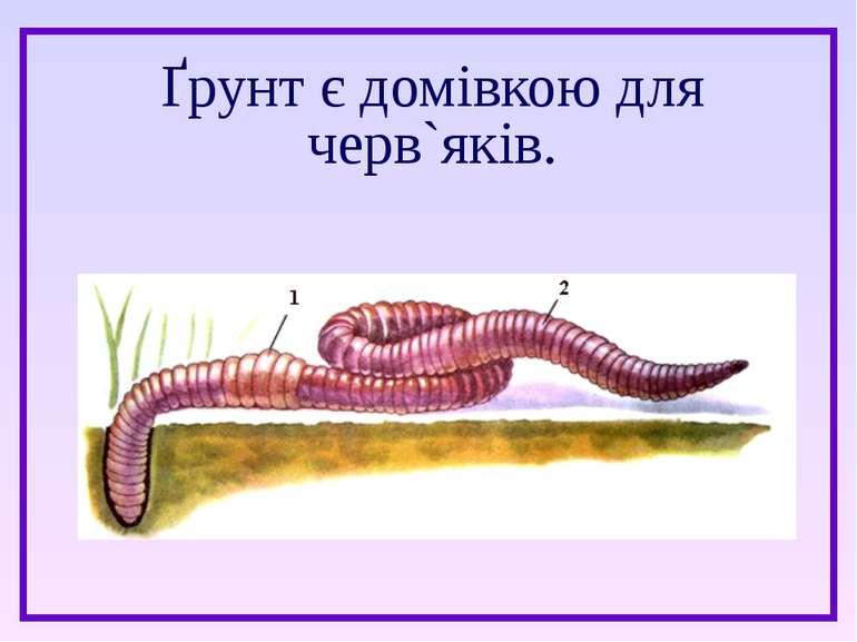 Ґрунт є домівкою для черв`яків.