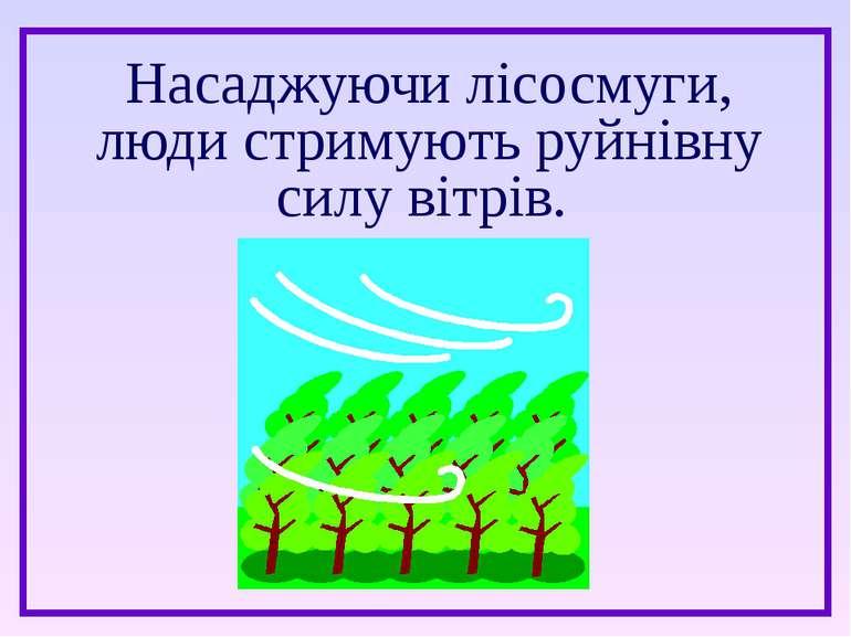 Насаджуючи лісосмуги, люди стримують руйнівну силу вітрів.