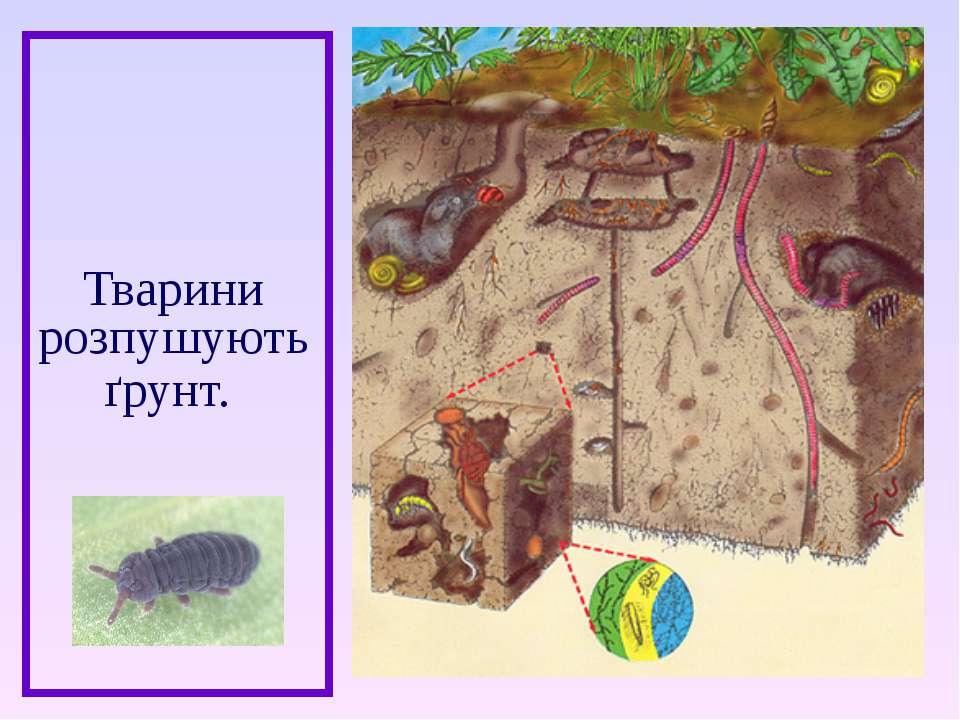Тварини розпушують ґрунт.