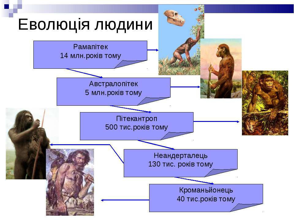 Еволюція людини Рамапітек 14 млн.років тому Австралопітек 5 млн.років тому Пі...