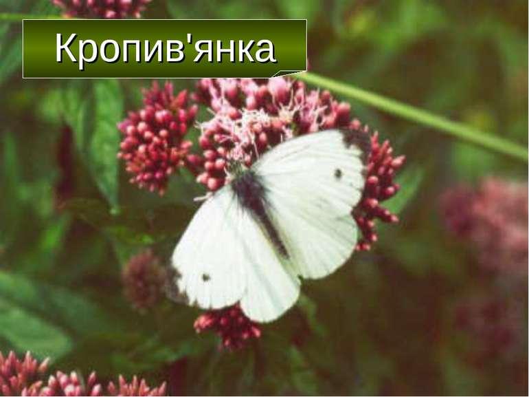 Кропив'янка