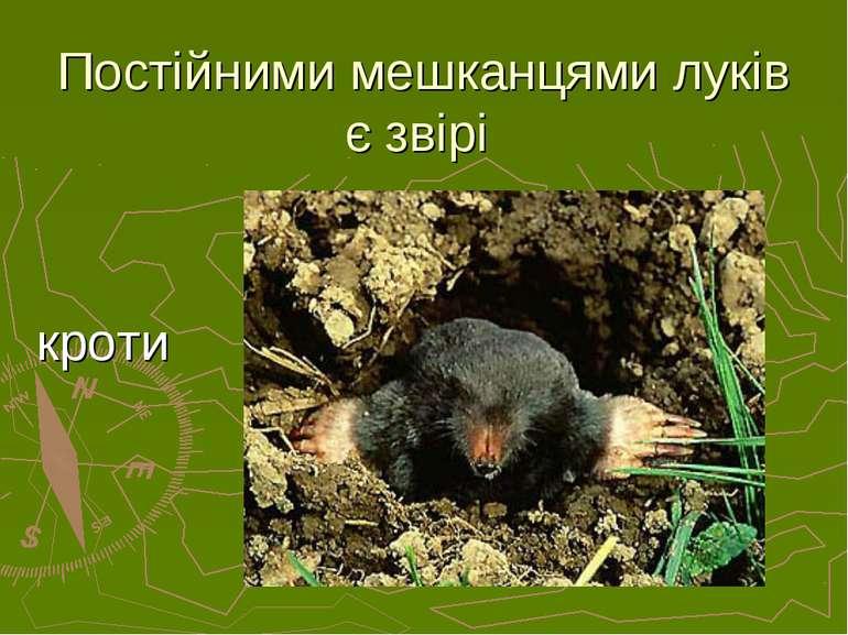 Постійними мешканцями луків є звірі кроти