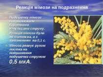 Подушечку мімози подразнювали короткими імпульсами струму. Реакція мімози бул...
