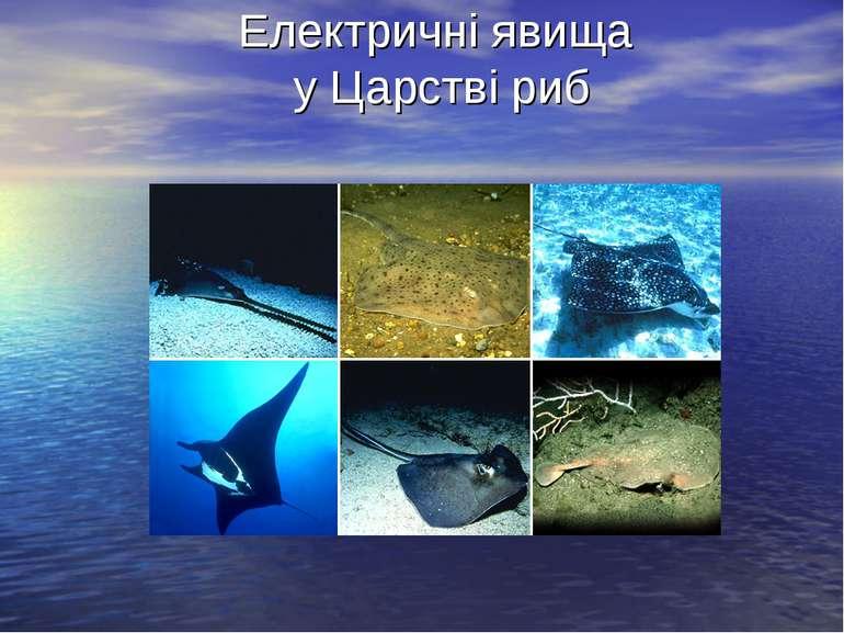 Електричні явища у Царстві риб