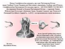 Наука Сенсфізіологіка доводить, що cаме Під'язикова Кістка надає Свободу Голо...