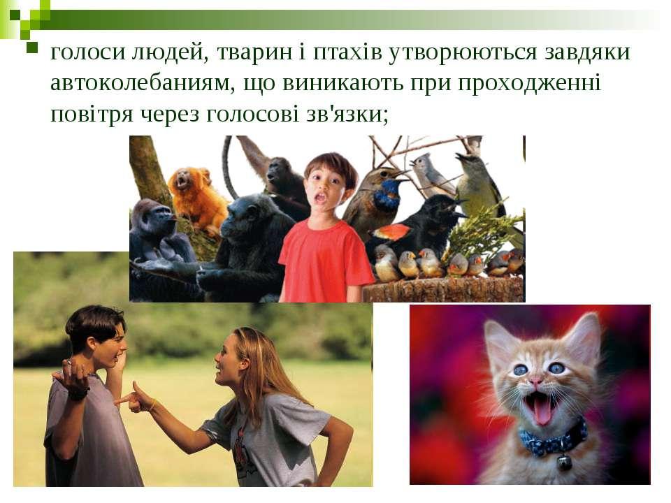 голоси людей, тварин і птахів утворюються завдяки автоколебаниям, що виникают...