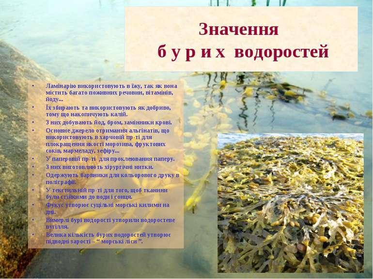 Значення б у р и х водоростей Ламінарію використовують в їжу, так як вона міс...