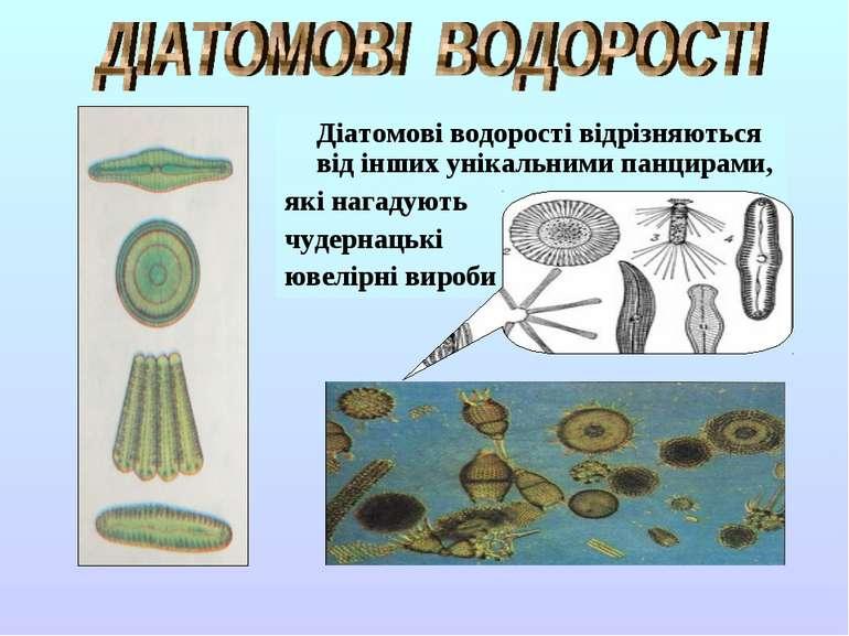 Діатомові водорості відрізняються від інших унікальними панцирами, які нагаду...