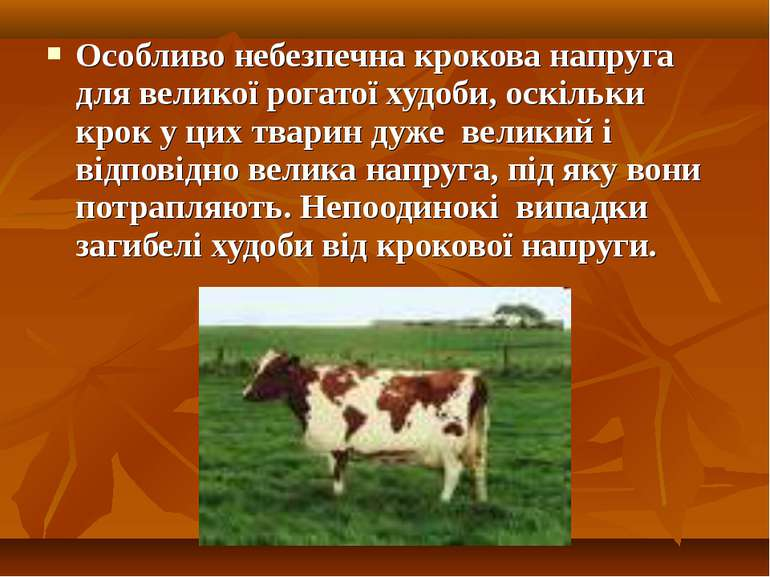 Особливо небезпечна крокова напруга для великої рогатої худоби, оскільки крок...