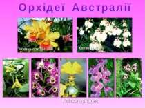 Квітка орхідеї Квітка орхідеї Квітки орхідей
