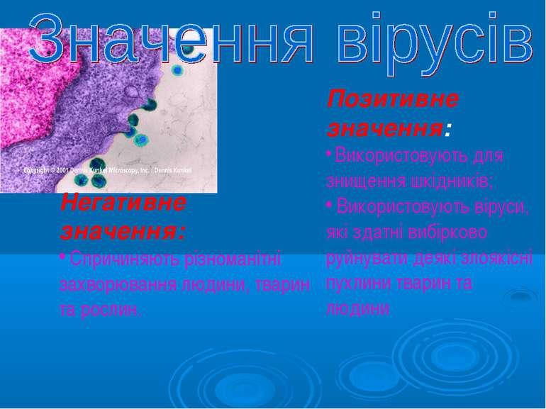 Негативне значення: Спричиняють різноманітні захворювання людини, тварин та р...