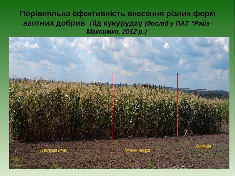 Порівняльна ефективність внесення різних форм азотних добрив під кукурудзу (д...