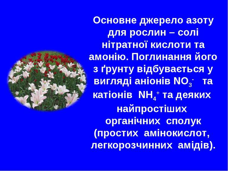 Основне джерело азоту для рослин – солі нітратної кислоти та амонію. Поглинан...