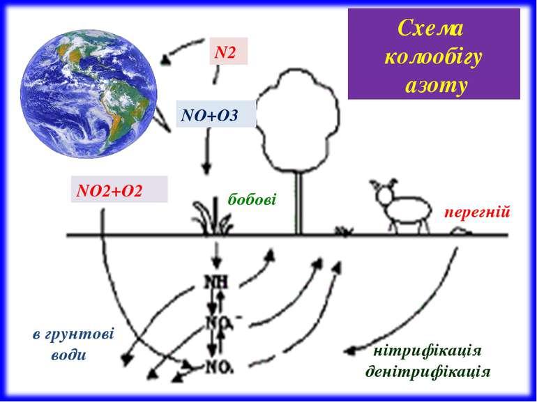 N2 NО2+О2 NО+О3 перегній бобові нітрифікація денітрифікація в грунтові води С...