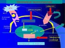 ДНК NFAT Кальцинейрин Синтез de novo гуанозину Проліферація Т і В лімфоцитів ...
