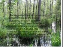 Формування боліт визначається кліматичною, геологічною будовою, історією розв...