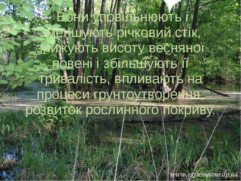 Вони уповільнюють і зменшують річковий стік, знижують висоту весняної повені ...