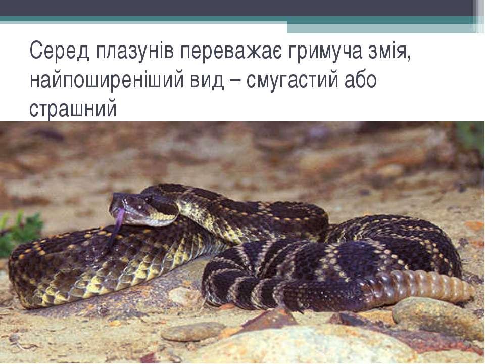Серед плазунів переважає гримуча змія, найпоширеніший вид – смугастий або стр...