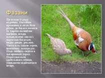 Ця птиця із роду курячих. Постійно проживає в лісах біля річок, де багато вол...