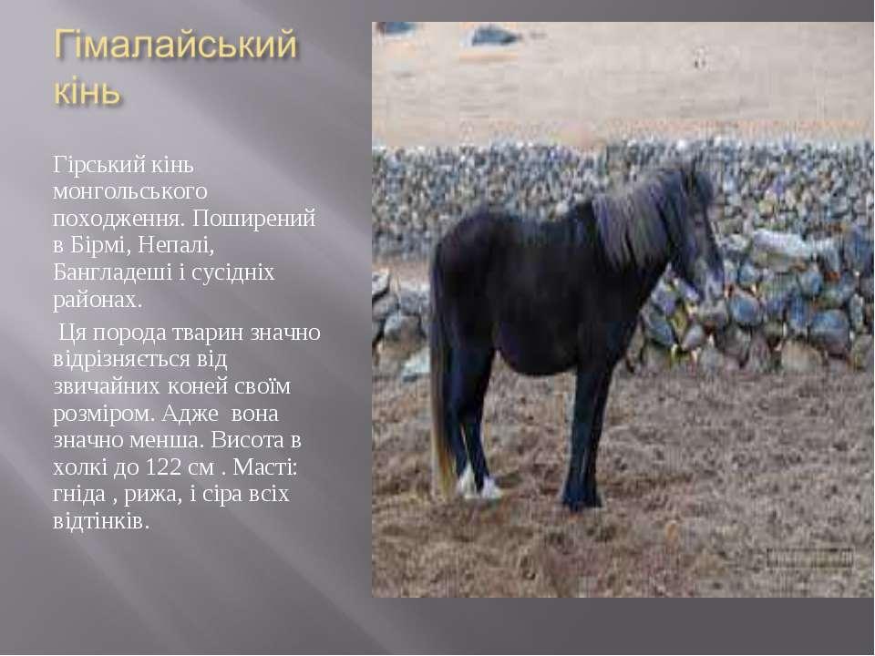 Гірський кінь монгольського походження. Поширений в Бірмі, Непалі, Бангладеші...
