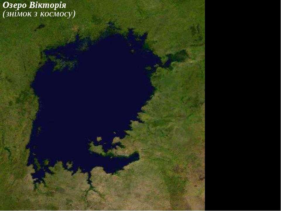 Озеро Вікторія (знімок з космосу)