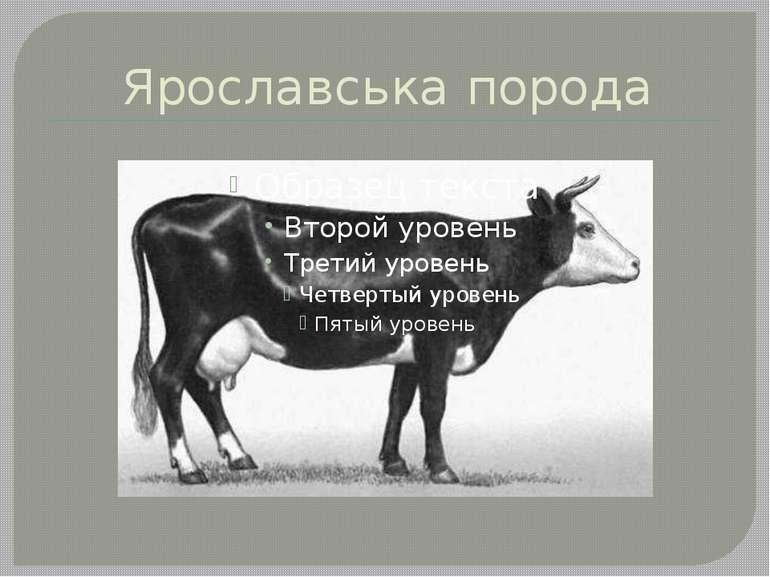 Ярославська порода