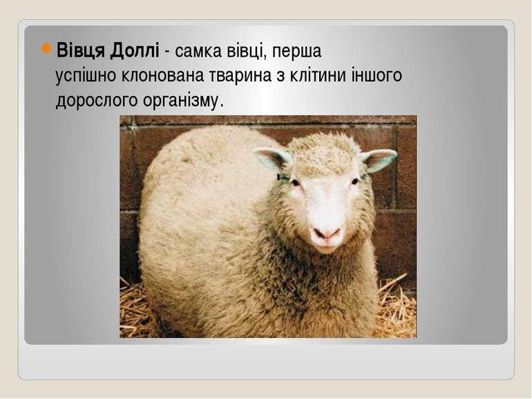 Вівця Доллі - самкавівці, перша успішноклонованатвариназклітини іншого д...