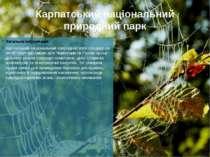 Карпатський національний природний парк Загальна інформація Карпатський націо...