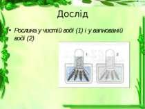 Дослід Рослина у чистій воді (1) і у вапнованій воді (2)
