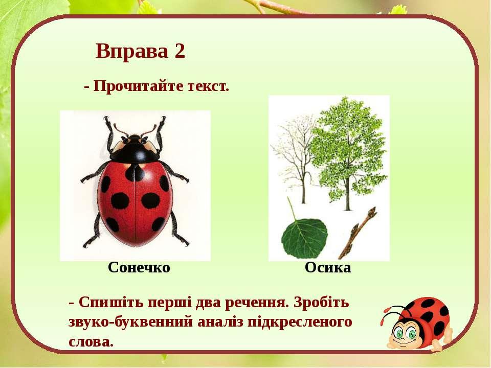 Вправа 2 - Прочитайте текст. Сонечко Осика - Спишіть перші два речення. Зробі...
