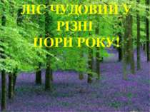 ЛІС ЧУДОВИЙ У РІЗНІ ПОРИ РОКУ!