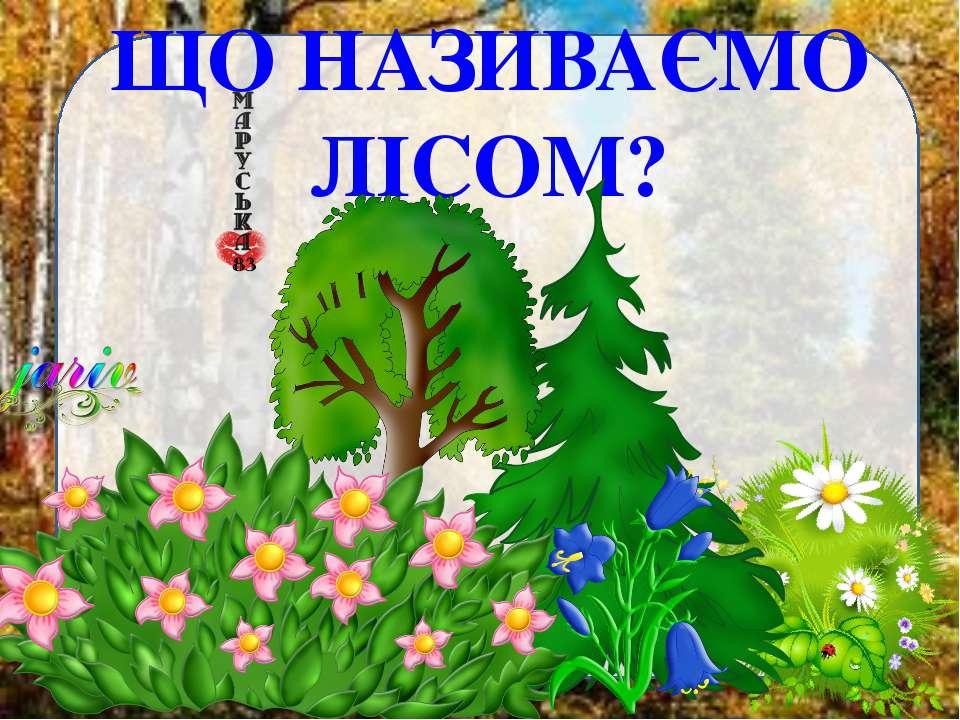 ЩО НАЗИВАЄМО ЛІСОМ?