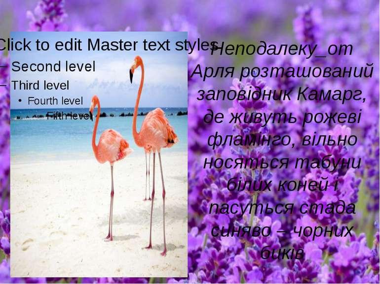 Неподалеку_от Арля розташований заповідник Камарг, де живуть рожеві фламінго,...