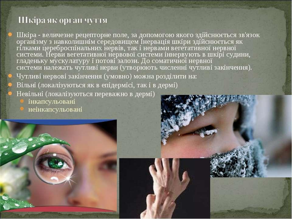 Шкіра - величезне рецепторне поле, за допомогою якого здійснюється зв'язок ор...