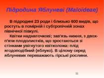 Підродина Яблуневі (Maloideae) В підродині 23 роди і близько 600 видів, що ро...