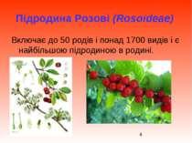 Підродина Розові (Rosoideae) Включає до 50 родів і понад 1700 видів і є найбі...