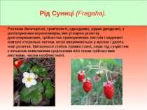 Рід Суниці (Fragaha). Рослини багаторічні, трав'янисті, однодомні, рідше двод...
