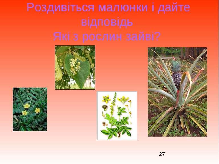 Роздивіться малюнки і дайте відповідь Які з рослин зайві?