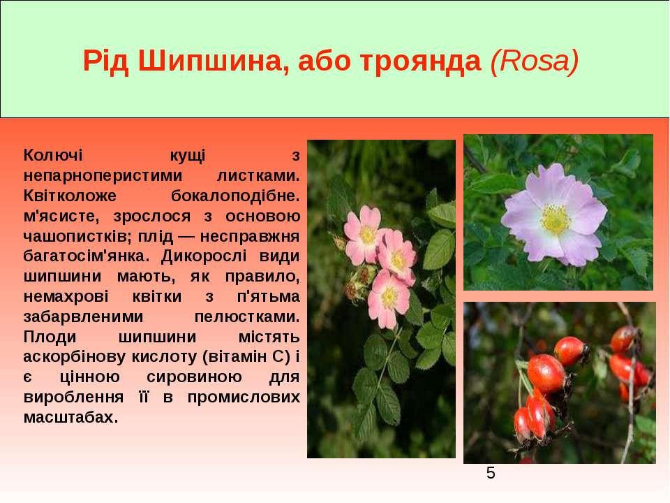 Рід Шипшина, або троянда (Rosa) Колючі кущі з непарноперистими листками. Квіт...