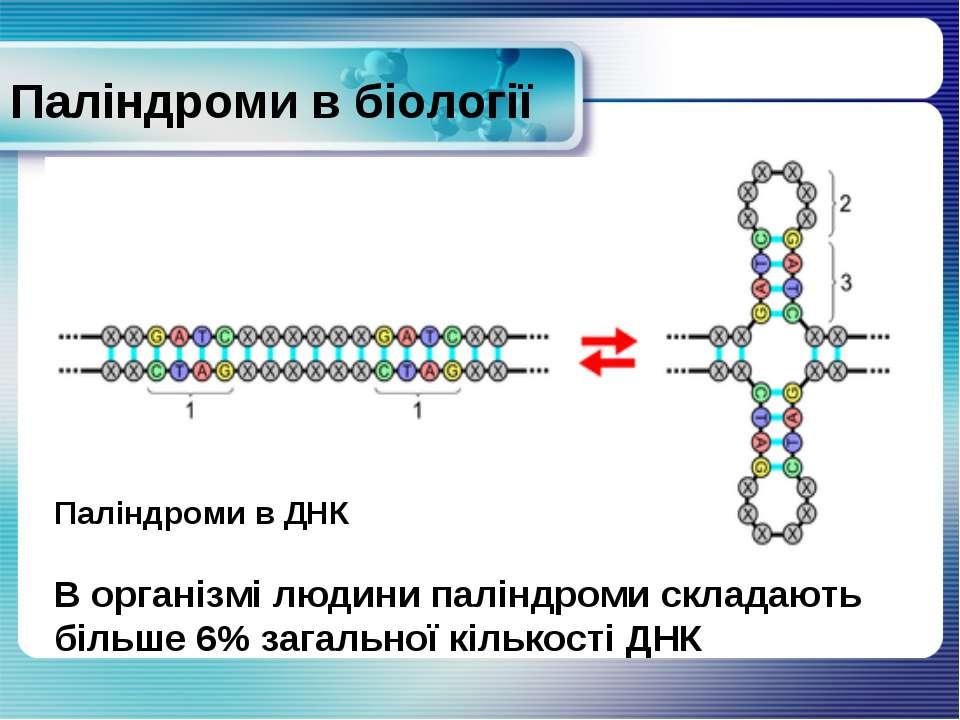 Паліндроми в біології Паліндроми в ДНК В організмі людини паліндроми складают...