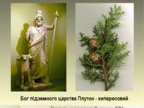 Бог підземного царства Плутон - кипарисовий Вчитель математики Подгорна Т.М.
