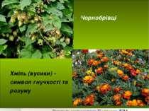 Хміль (вусики) - символ гнучкості та розуму Чорнобрівці Вчитель математики По...