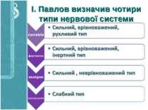 І. Павлов визначив чотири типи нервової систе�