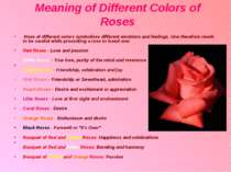 Meaning of Different Colors of Roses Rose of different colors symbolizes diff...