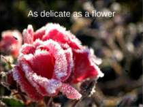 As delicate as a flower