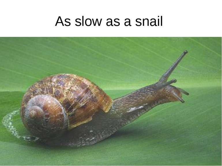 As slow as a snail