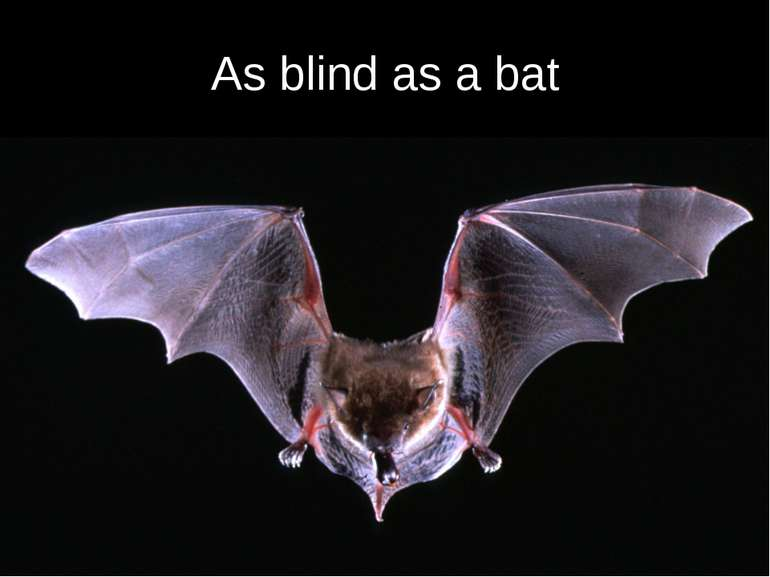 As blind as a bat