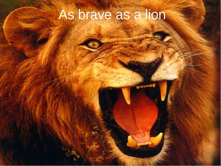 As brave as a lion