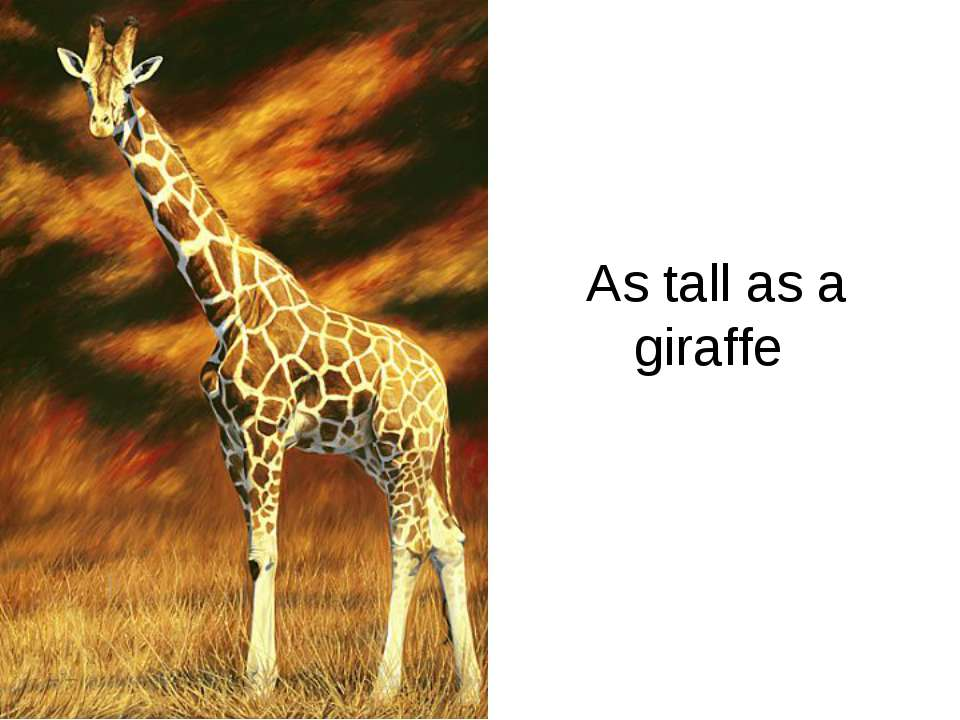 As tall as a giraffe