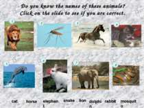 Do you know the names of these animals? Click on the slide to see if you are ...
